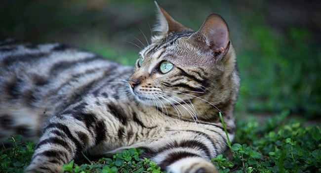 7 breeds of cats that will fascinate