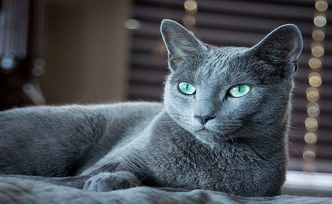 7 breeds of cats that will fascinate1