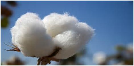 Clever Cotton