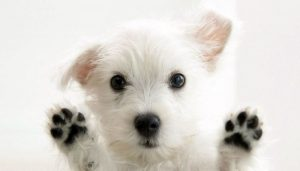 Dogs Pads Care-How to cure Dog's Pads at home