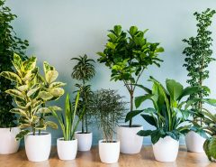 How to Decorate Your House with Green Plants?
