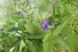 How To Make An Orchard Of Aromatic And Medicinal Plants