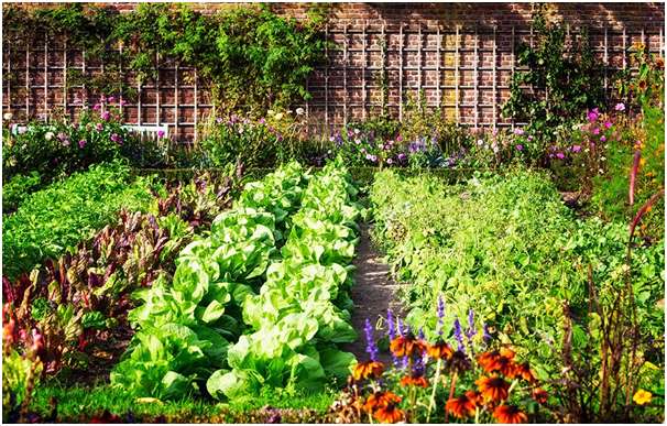 Vegetable Patch Ready for Spring