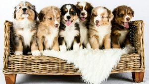 Top 10 Most Intelligent Dog Breed