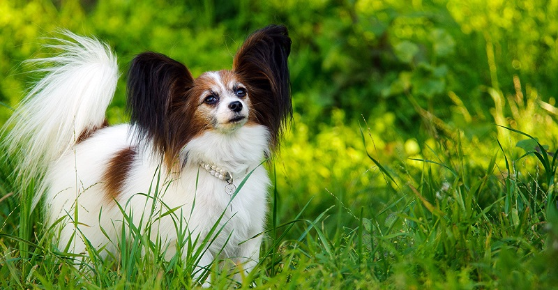 Top 10 Most Intelligent Dog Breed