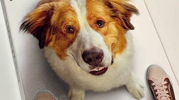 A dog's journey dvd release date